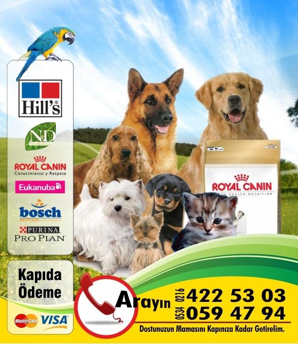 Çengelköy Büyük Beyaz Pet Center – Reklam